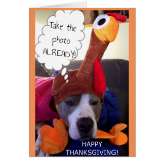 Thanksgiving - Pathetic Pittie Card