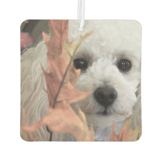 Thanksgiving Toy Poodle car air freshner Car Air Freshener