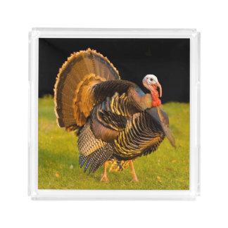 Thanksgiving turkey acrylic tray
