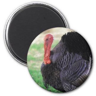 Thanksgiving Turkey Bird 6 Cm Round Magnet