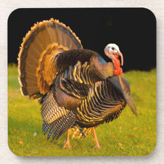 Thanksgiving turkey coaster