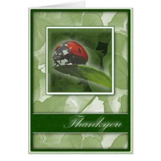 Thankyou Lady Beetle Greeting Card