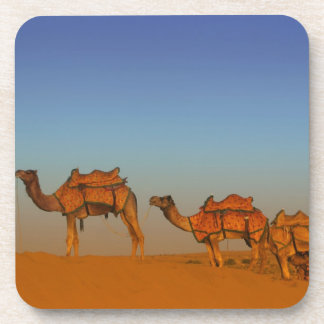 Thar desert, Rajasthan India. Camels along the Coaster