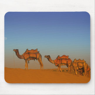Thar desert, Rajasthan India. Camels along the Mouse Mat