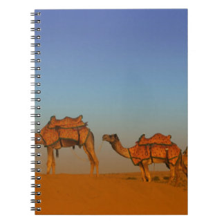 Thar desert, Rajasthan India. Camels along the Notebook