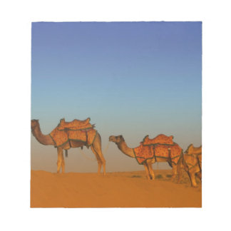 Thar desert, Rajasthan India. Camels along the Notepad