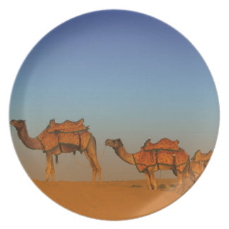 Thar desert, Rajasthan India. Camels along the Plate