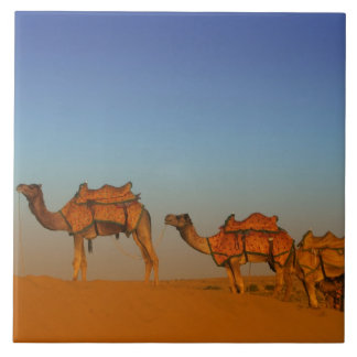 Thar desert, Rajasthan India. Camels along the Tile