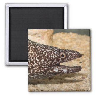 That's a Moray!  Square Magnet