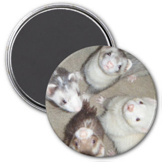 The 4 Musketeer Ferrets! Refrigerator Magnet