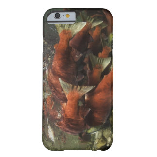 The Adams River sockeye run is one of the Barely There iPhone 6 Case