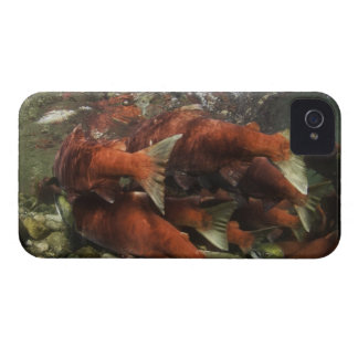 The Adams River sockeye run is one of the iPhone 4 Case-Mate Case