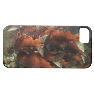 The Adams River sockeye run is one of the iPhone 5 Cover