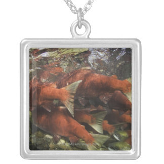 The Adams River sockeye run is one of the Silver Plated Necklace