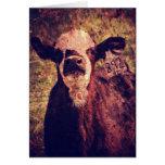 The Adorable Calf Cards