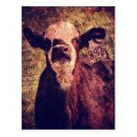 The Adorable Calf Post Card