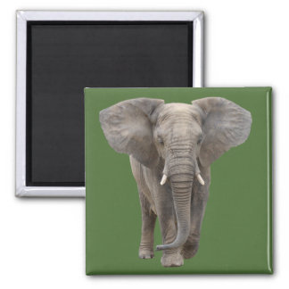 The African elephant Square Magnet