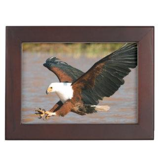 The African Fish Eagle (Haliaeetus Vocifer) Keepsake Box