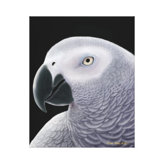 The African Gray Parrot Wrapped Canvas Canvas Print