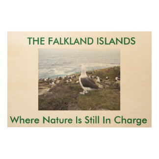 The Albatross. Falkland Islands Wood Wall Art