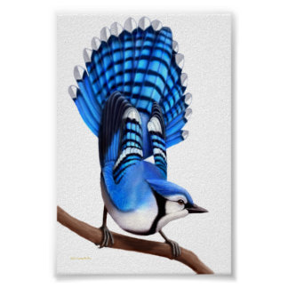 The Alert Blue Jay Poster