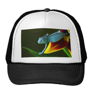 The Amazing Chameleon Cap