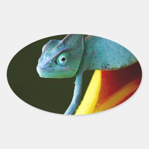 The Amazing Chameleon Oval Sticker