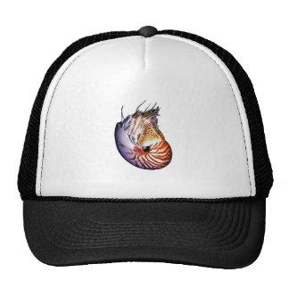 THE AMAZING NAUTILUS CAP