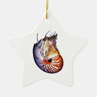 THE AMAZING NAUTILUS CERAMIC STAR DECORATION
