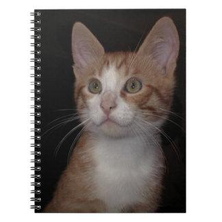 The amazing world of cats - orange kitten notebook