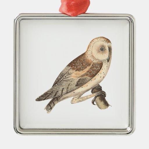 The American Barn Owl(Strix pratincola)1