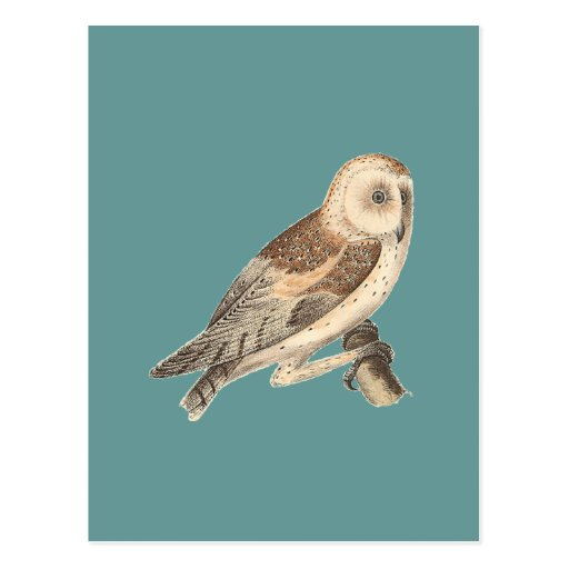 The American Barn Owl	(Strix pratincola)1 Post Cards