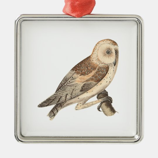 The American Barn Owl	(Strix pratincola)1 Silver-Colored Square Decoration