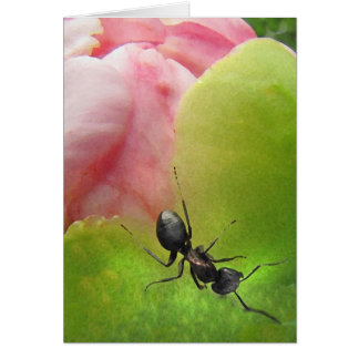 The Ant and the Peony Card
