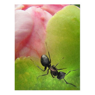 The Ant and the Peony Postcard