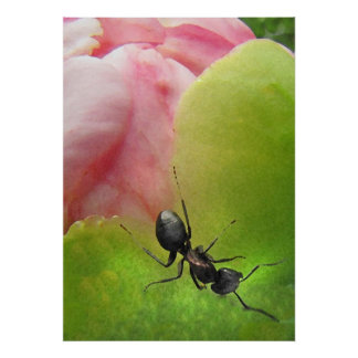 The Ant and the Peony Poster