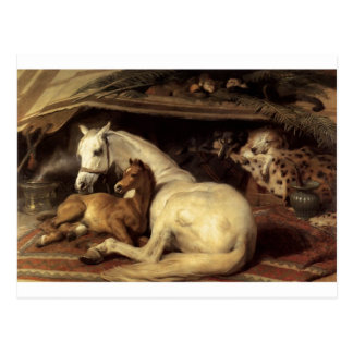 The Arab Tent by Edwin Henry Landseer Postcard