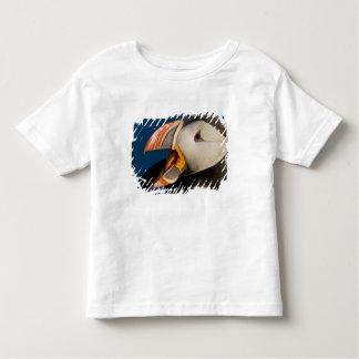 The Atlantic Puffin, a pelagic seabird, shown 2 Tee Shirts