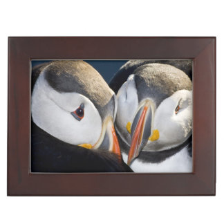 The Atlantic Puffin, a pelagic seabird, shown 3 Keepsake Box