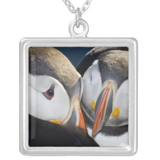 The Atlantic Puffin, a pelagic seabird, shown 3 Silver Plated Necklace