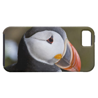 The Atlantic Puffin, a pelagic seabird, shown Case For The iPhone 5