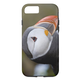 The Atlantic Puffin, a pelagic seabird, shown iPhone 8/7 Case