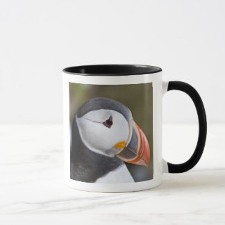 The Atlantic Puffin, a pelagic seabird, shown Mug