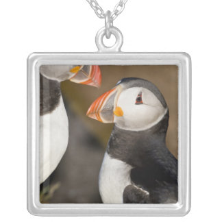 The Atlantic Puffin, a pelagic seabird, shown Silver Plated Necklace