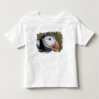 The Atlantic Puffin, a pelagic seabird, shown Toddler T-Shirt