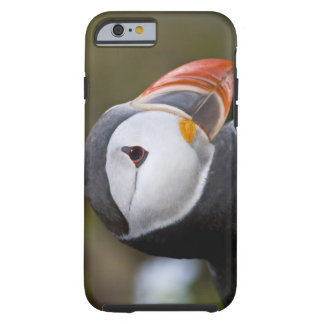 The Atlantic Puffin, a pelagic seabird, shown Tough iPhone 6 Case