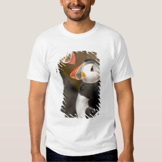The Atlantic Puffin, a pelagic seabird, shown Tshirt