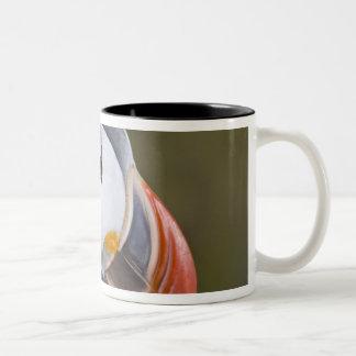 The Atlantic Puffin, a pelagic seabird, shown Two-Tone Coffee Mug