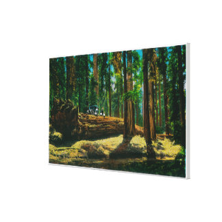 The Auto Log in Giant Forest, Redwoods Canvas Print