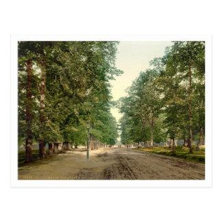 The Avenue, Southampton, Hampshire, England Postcard